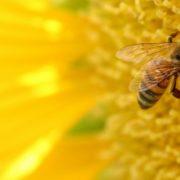 החיים דבש האומנם או איך אנחנו מכניסים יותר דבש לחיינו
